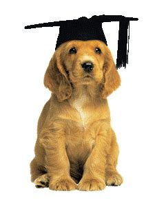 puppy graduation puppy socialisation and