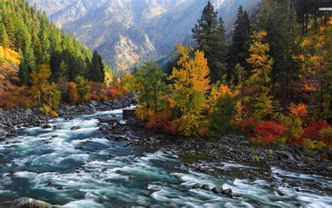 rushing river forest mountains wallpapers rushing river