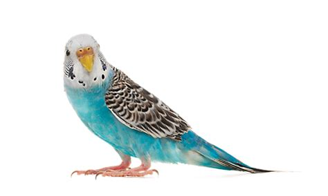 online bird supplies parrot parakeet supply store