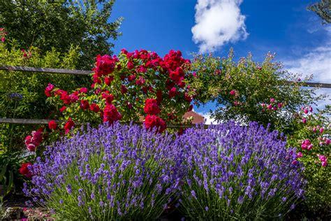 Bilder Gärten 4872 by Sch 227 Ne G 227 Rten Bilder 3828 Gt Tipps Garten Idee Garten