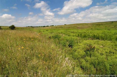 what is a prairie my own prairie for what it s worth the prairie ecologist