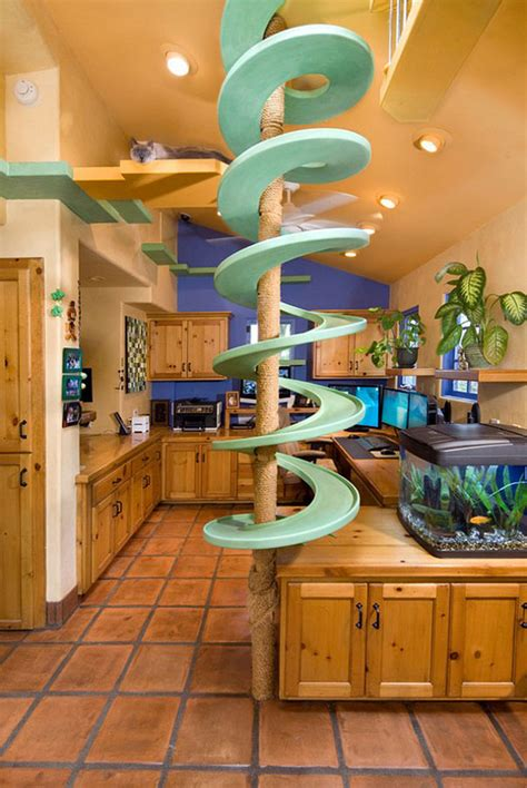casa gatti spends 35 000 to turn his house into the playground