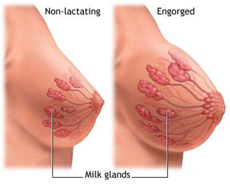 how long until milk comes in after c section top 15 early symptoms of pregnancy indusladies com