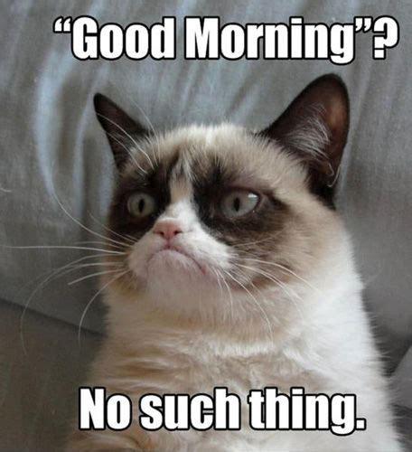 Popular Cat Memes - top 10 grumpy cat memes