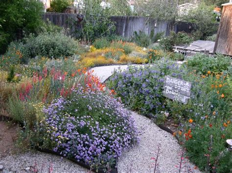25 best ideas about california native garden on pinterest california native plants