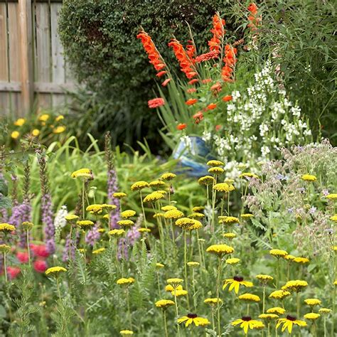 Flowers For A Butterfly Garden Plant A Butterfly Garden
