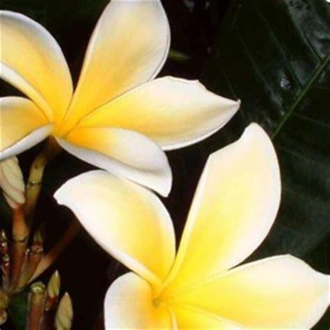 fiori di bach per lutto fiori di bach per lutto 28 images depressione fiori di