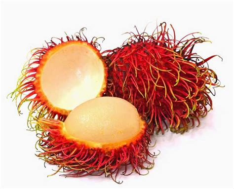 imagenes de semillas varias las 25 frutas m 225 s extra 241 as y deliciosas del mundo la voz