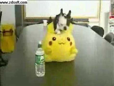 pug pikachu pug humps pikachu