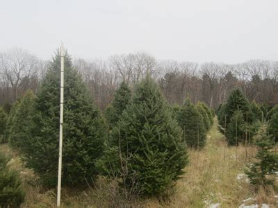 point pleasant christmas tree farm country mission farm country mission farm