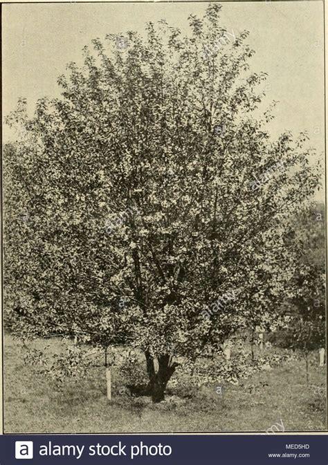 Kleiner Baum Für Garten 858 by Unsere Garten Stock Photos Unsere Garten Stock Images