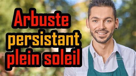Arbuste En Pot Pour Terrasse Plein Soleil by Arbuste Persistant Plein Soleil Sans Entretien