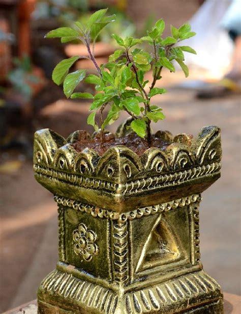Home Garden Design Tips Tulasi Brindavan 4 Inches Pot Ocimum Sanctum Only For