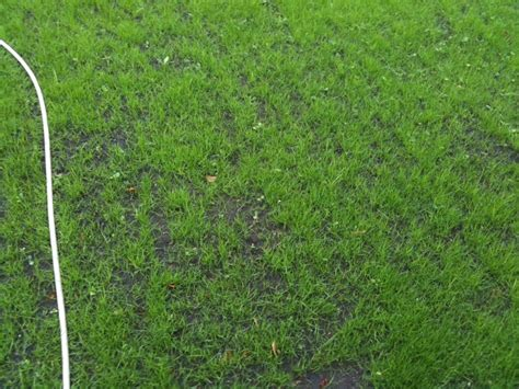 Pilze Im Rasen Zu Nass by Rasen Sprengen Rasen Wssern With Rasen Sprengen