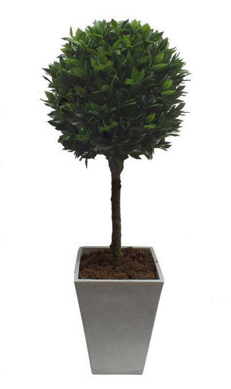 Bay Tree Planter by 1000 Images About Artificial Topiary On