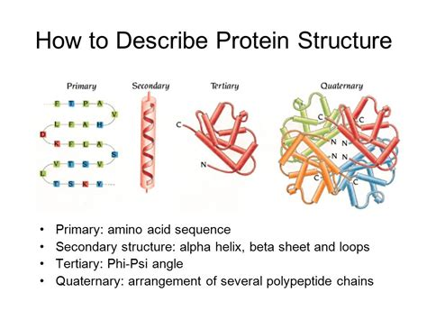 3 protein structure introduction to protein structure ppt