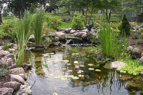 is a backyard pond an ecosystem ecosystem ponds and water features in des moines just