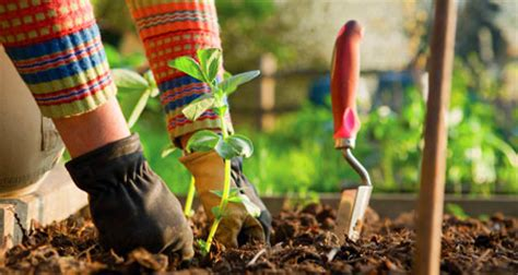 when to plant garden vegetables when to plant vegetables vegetablegardeninglife