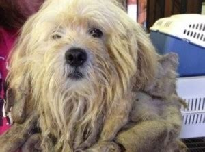 puppy mills in ga june 2014 puppy leaks