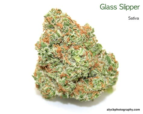 white slipper strain glass slipper marijuana reviews thc finder