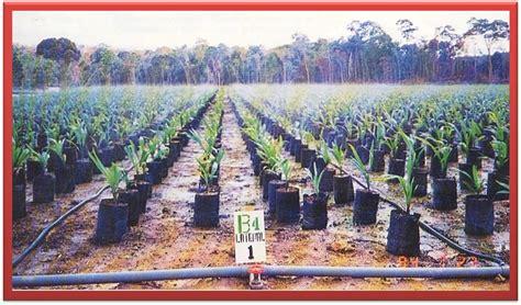 Bohlam Emergency Luby 7 Watt membangun kebun kelapa sawit pembibitan