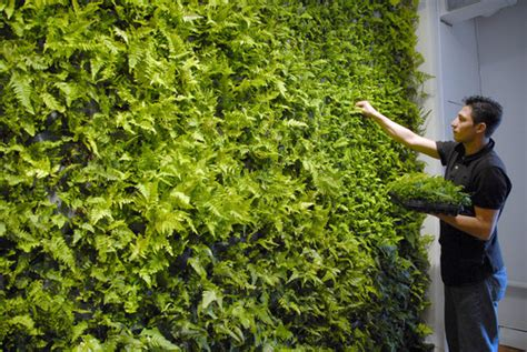 Artificial Climbing Plants - green wall in baltimore furniture store burgess s blog