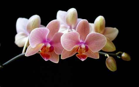 imagenes artisticas hd the gallery for gt orchids wallpaper