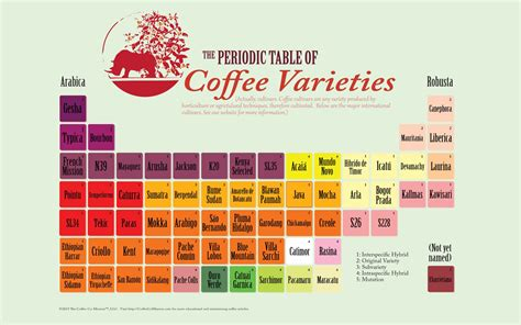 infographic periodic table of coffee varieties or cultivars