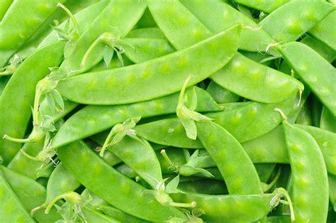 Peas snow   Harvest to Table