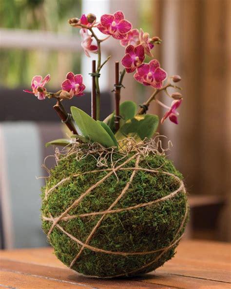 supermoss orchid kokedama kit