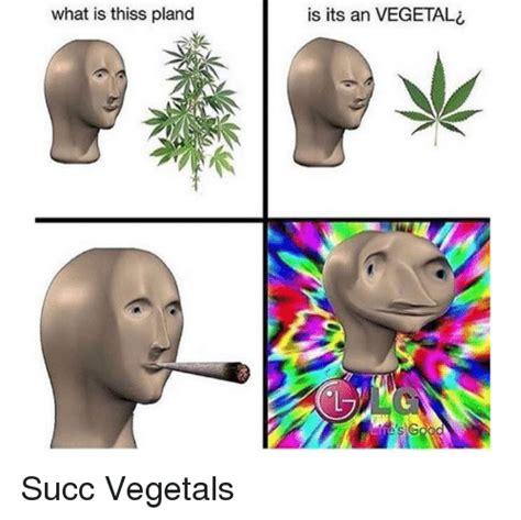 Meme Man - what is thiss pland is its an vegeta s s g vegeta meme