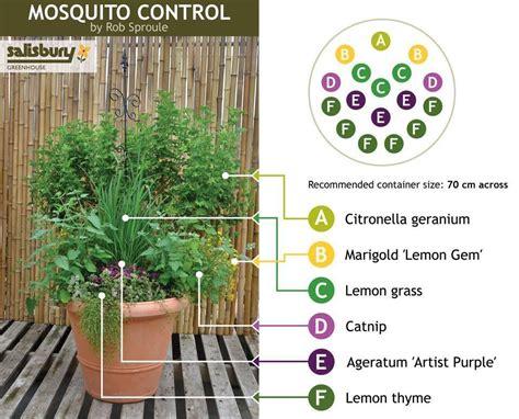 best plant for mosquito repellent mosquito control 26 mosquito repellent plants for your