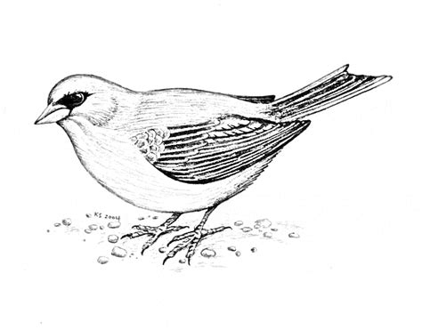 junco bird coloring page junco coloring page animals town animals color sheet