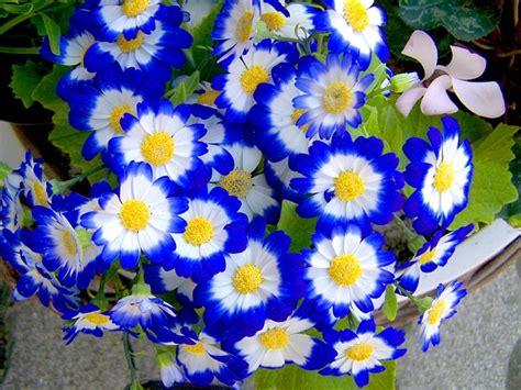 immagini fiori di primavera foto gratis fiore di primavera giardino immagine