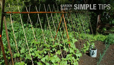 straighten up cage stake or trellis veggies this week