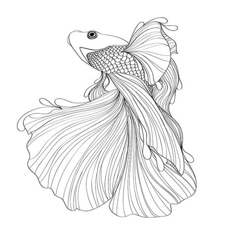 coloring pages betta fish siamese fighting fish on behance illustrations