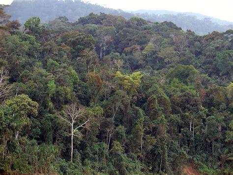amazon de anazon rainforest kiến thức 193 i hữu bi 234 n h 242 a