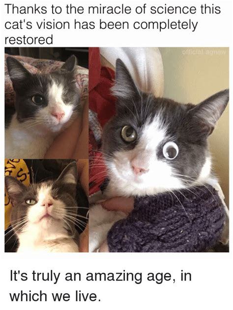 Thanks Aunties We Are The Cat In The Flickr by 25 Best Memes About Memes