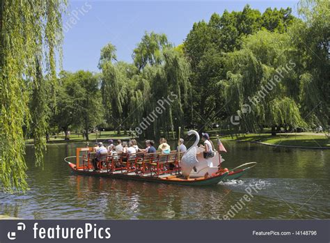 swan boats in central park nature landscapes boston parks stock photo i4148796 at