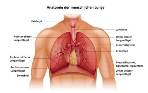 probleme beim atmen im liegen lunge funktion therapie diagnose behandlung anatomie