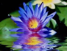 Lotus Bleu Lotus Bleu Photo De Mandalas Pour Yurtao Yurtao La