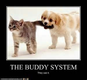 Fuck Buddy Meme - the buddy system the barbelle