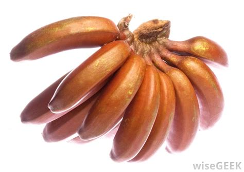 guide to six different types of bananas image gallery different bananas