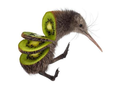 kiwi bird fruit