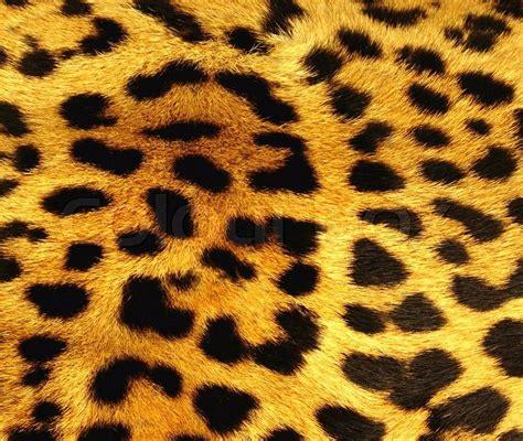 Animal Print Home Decor by Leopard Skin Texture Stock Photo Colourbox