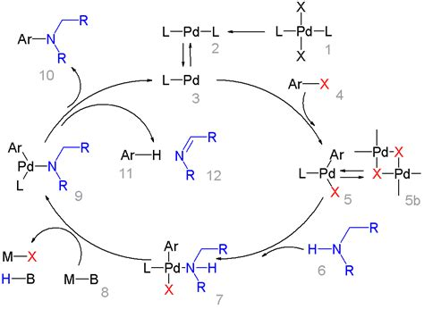 bücherwand file buchwald hartwig reaction mechanism png wikimedia