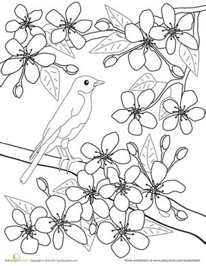 color the flowers cherry blossoms coloring page