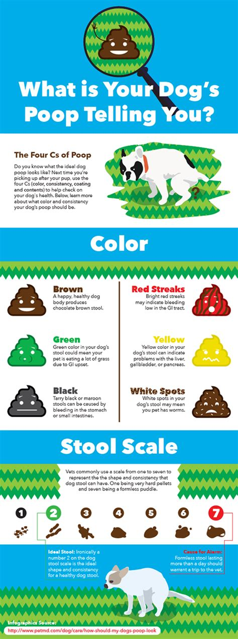 what color should your stool be black tarry due to presence of blood in dogs petmd