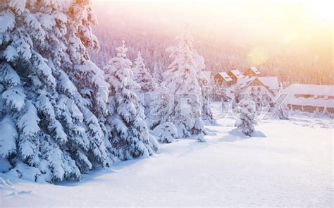 luxury alpine snow tree beautiful landscape of winter resort cozy houses near fir trees covered with snow