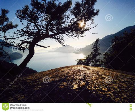 luxury alpine snow tree stunted tree overlooking the pacific near sunset stock photo image 74534810